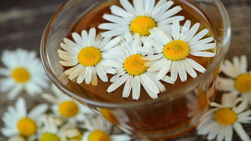 papatya-çayı-faydaları
